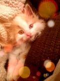 Kitty apenas que se relaja foto de archivo libre de regalías
