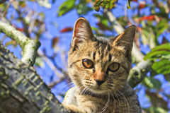 A kitty on the apple tree. Kitty on the apple tree Royalty Free Stock Image