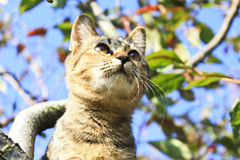 A kitty on the apple tree Stock Image