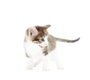 Kitty attacks. On a white background royalty free stock photography