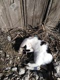 kitty photographie stock