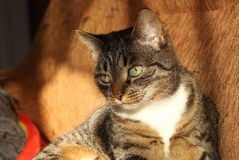 Kitty Stock Photography
