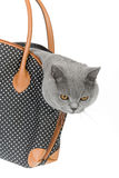 Kitty in a bag. Cat in bag isolated in white Royalty Free Stock Photos