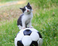 Kitty on a ball Royalty Free Stock Image