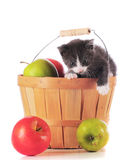 Kitty in a Basket Stock Photo