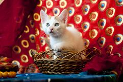 kitty in a basket Royalty Free Stock Images