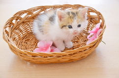 Kitty in a basket Royalty Free Stock Photography