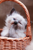 Kitty In Basket Royalty Free Stock Photography