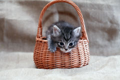 Kitty In Basket Royalty Free Stock Image