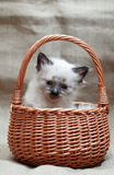 Kitty In Basket Royalty Free Stock Images