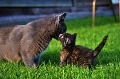 Kitty Bonding Image stock