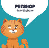 Kitty with bubble speech pet shop icon Royalty Free Stock Image