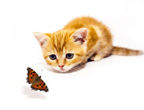 Kitty and butterfly Royalty Free Stock Photos