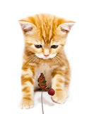 Kitty and butterfly Stock Photos