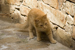 Kitty cat. Exploring a french village - adobe RGB stock images