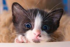 Kitty cat. Little kitty cat baby eyes stock image