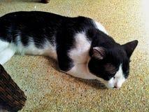 Kitty Cat addormentata Fotografia Stock Libera da Diritti