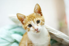 Kitty cat Stock Photography