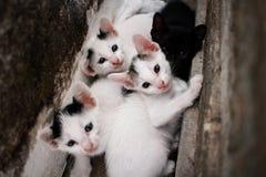 Kitty Cat in de muur stock afbeeldingen
