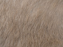 Kitty cat fur. Stock Photography