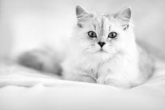Kitty cat laying in the bed royalty free stock image