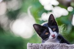 The kitty cat like wonder around in the background. Stock Photography