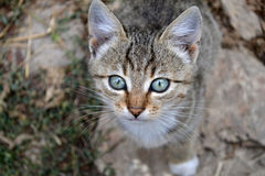 Kitty. Cat looking at the camera, close up Stock Image
