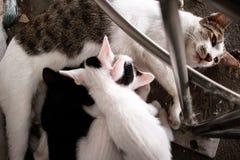 Kitty Cat med mamman royaltyfri fotografi
