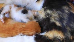 Kitty Cat Pet Mammal Animal adorable dulce metrajes