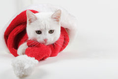 Kitty cat playing with santa hat Royalty Free Stock Image