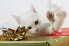 Kitty cat playing with santa hat Stock Photography