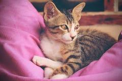 Kitty cat Stock Image