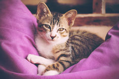 Kitty cat Royalty Free Stock Photography
