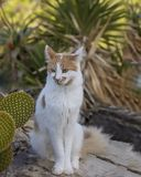 Kitty Cat que olha lateralmente Close-up imagens de stock royalty free