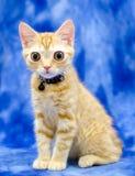 Kitty Cat Seymore Beanie Boo observada grande Imagen de archivo libre de regalías