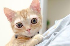 Kitty Cat Seymore Beanie Boo observada grande Imagenes de archivo