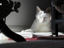 Kitty Cat Sleeping en una esquina reservada Foto de archivo