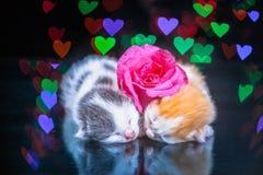 Kitty cat sleeping on glass Stock Photo