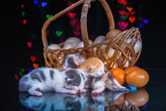 Kitty cat sleeping on glass Stock Images