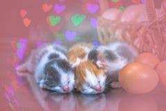 Kitty cat sleeping on glass Stock Photography