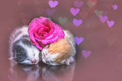 Kitty cat sleeping on glass Royalty Free Stock Images