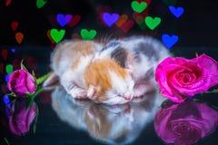 Kitty cat sleeping on glass Stock Image