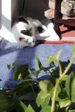 Kitty Cat Sleeping i ett hörn arkivbilder