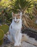 Kitty Cat som från sidan ser Närbild royaltyfria bilder