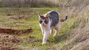 kitty cat walking through grass outdoors stock image