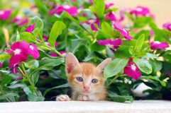 Kitty cat on a wild flower blackground Royalty Free Stock Photos