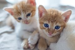 Kitty Cats images stock