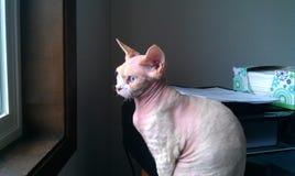 Kitty che fissa fuori finestra Immagine Stock Libera da Diritti