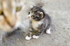 Kitty che imita immagini stock libere da diritti