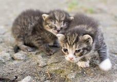 Kitty che imita fotografia stock libera da diritti